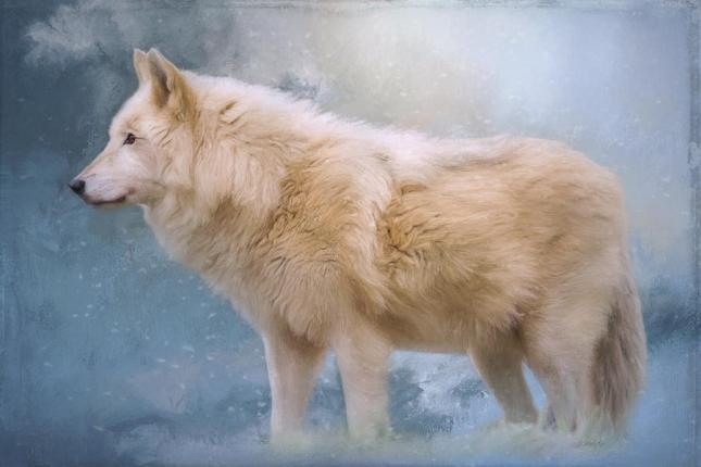 Arctic Wolf | Artwork