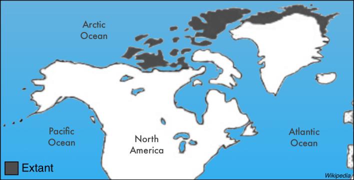 Arctic Wolf Range